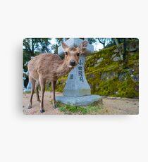 Miyajima Deer Canvas Print
