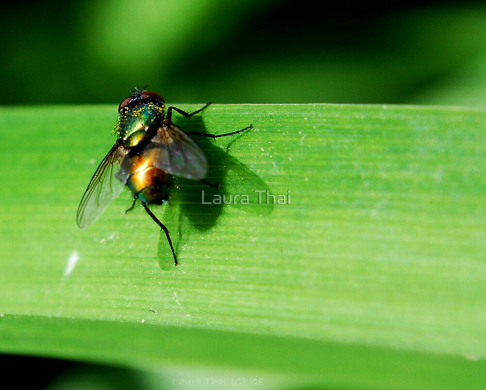 Pollinating fly. by Laura Thai