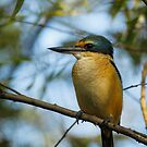 Sacred Kingfisher by theleastone