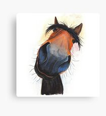 HAPPY HORSE 'HAPPY DAVE' BY SHIRLEY MACARTHUR Canvas Print