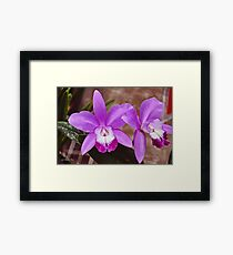 Lilac Wednesday Framed Print