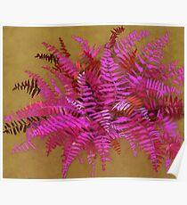 Fern, pink & gold version Poster