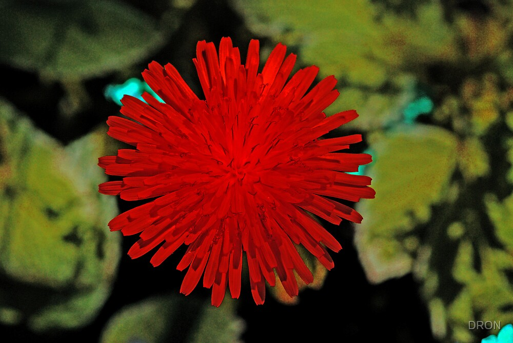 Red dandelion by dron redbubble for Dandelion flowers and gifts