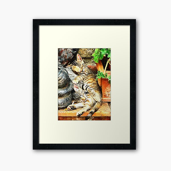 Kitten Snuggles Framed Art Print