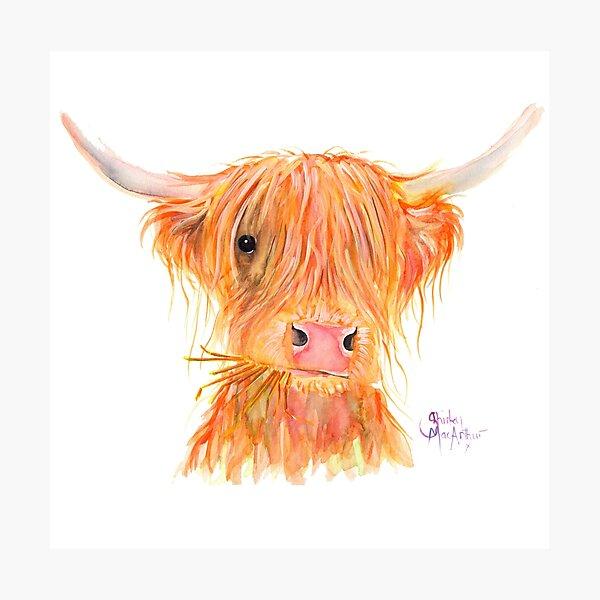 SCOTTISH HIGHLAND COW 'FERGUS' By Shirley MacArthur Photographic Print