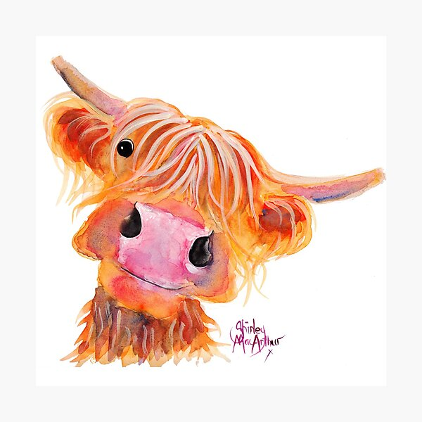Highland Cow 'NESSIE' from Original Painting by Shirley MacArthur Photographic Print
