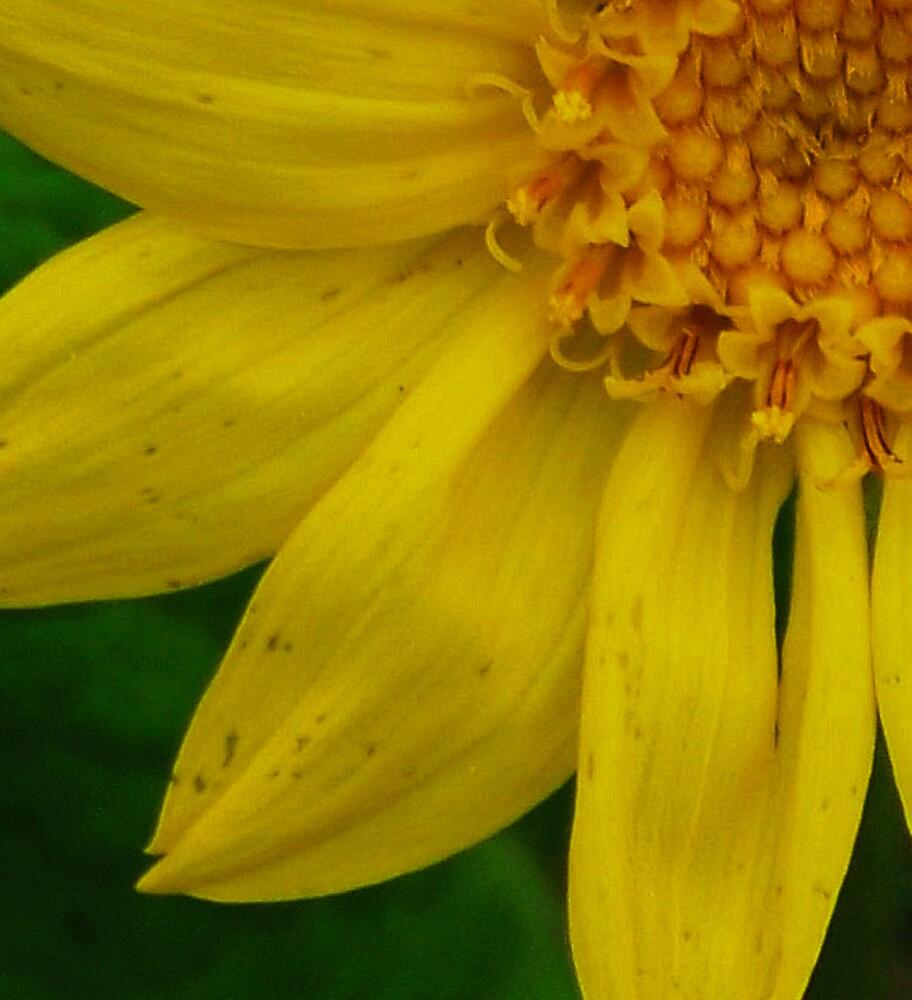 wild flower macro by conilouz