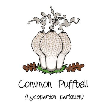 Common Puffball - without smiley face by Immy