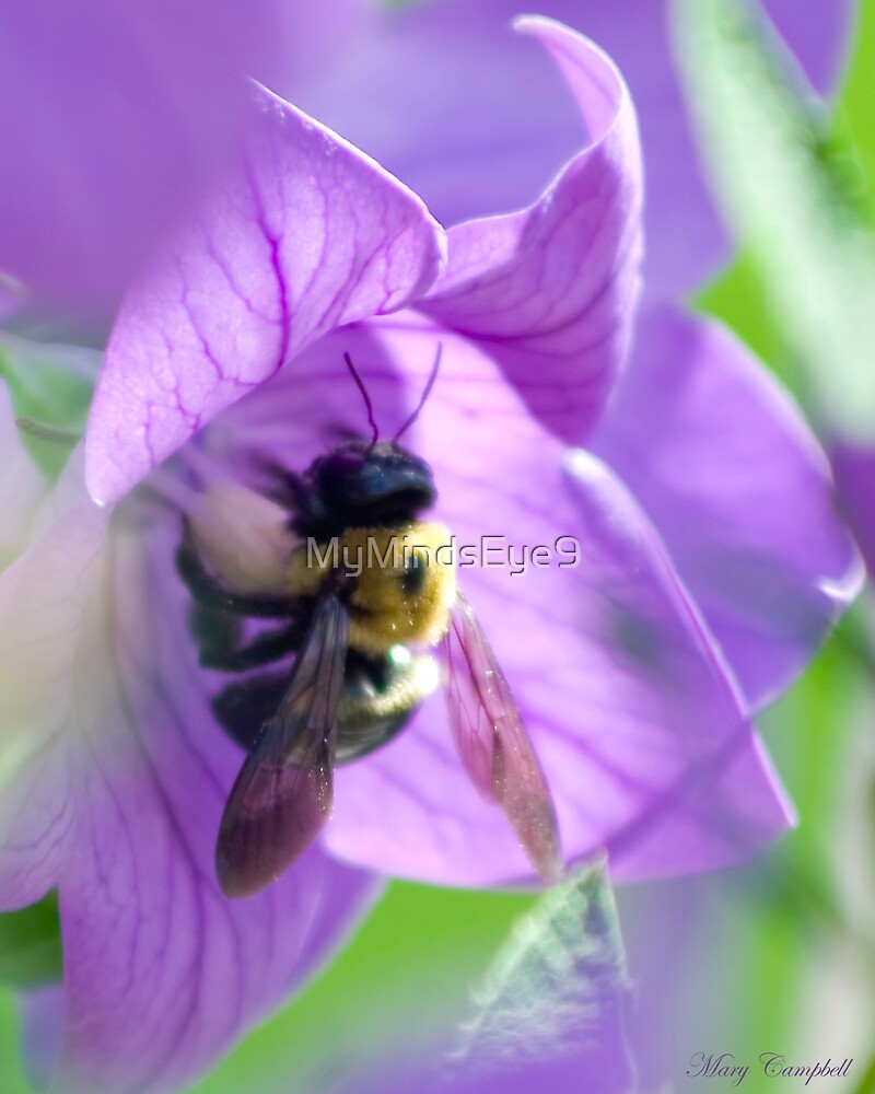 Bee Kiss by Mary Campbell