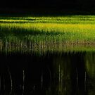 The enchanted Lake by Imi Koetz