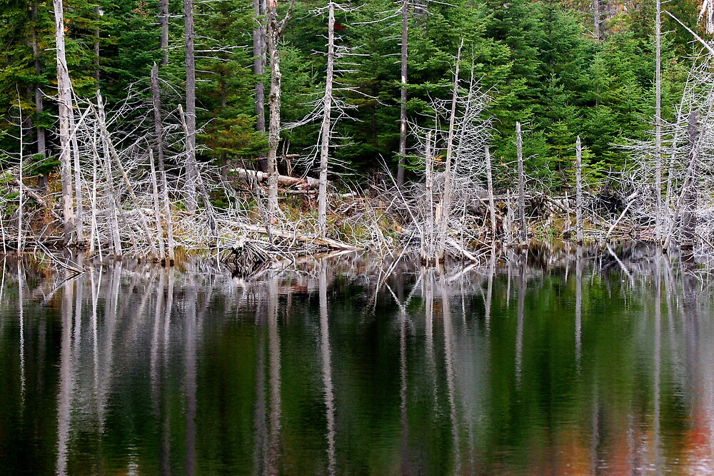 Lakeside Pines by Dave Law