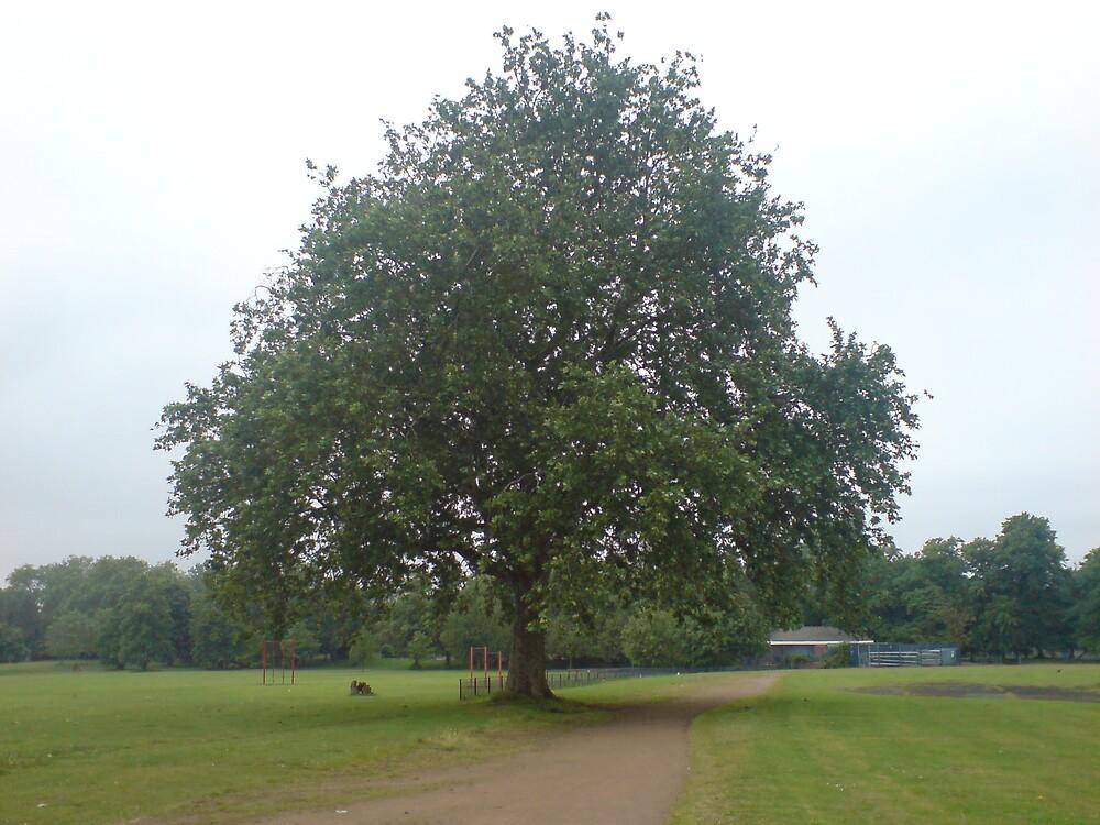 TREE OF LIFE by Deirdre Banda