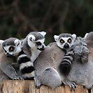 Group Hug by Ann  Van Breemen