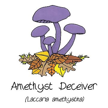 Amethyst deceiver - no smiley face by Immy