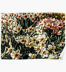 Buckets Of Springtime! Poster