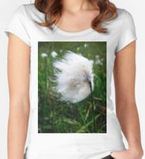 Common Cottongrass Seed-head Women's Fitted Scoop T-Shirt