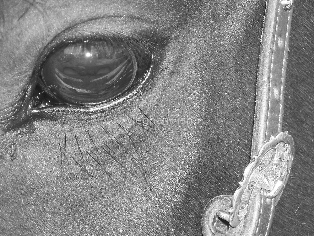 black and white horse eye by MeghanFish