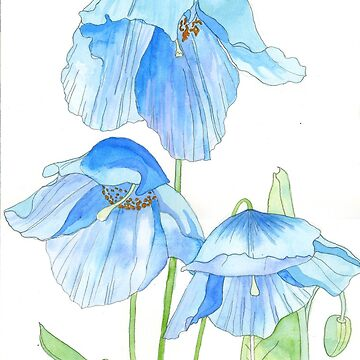 Himalayan Blue Poppies by esvb