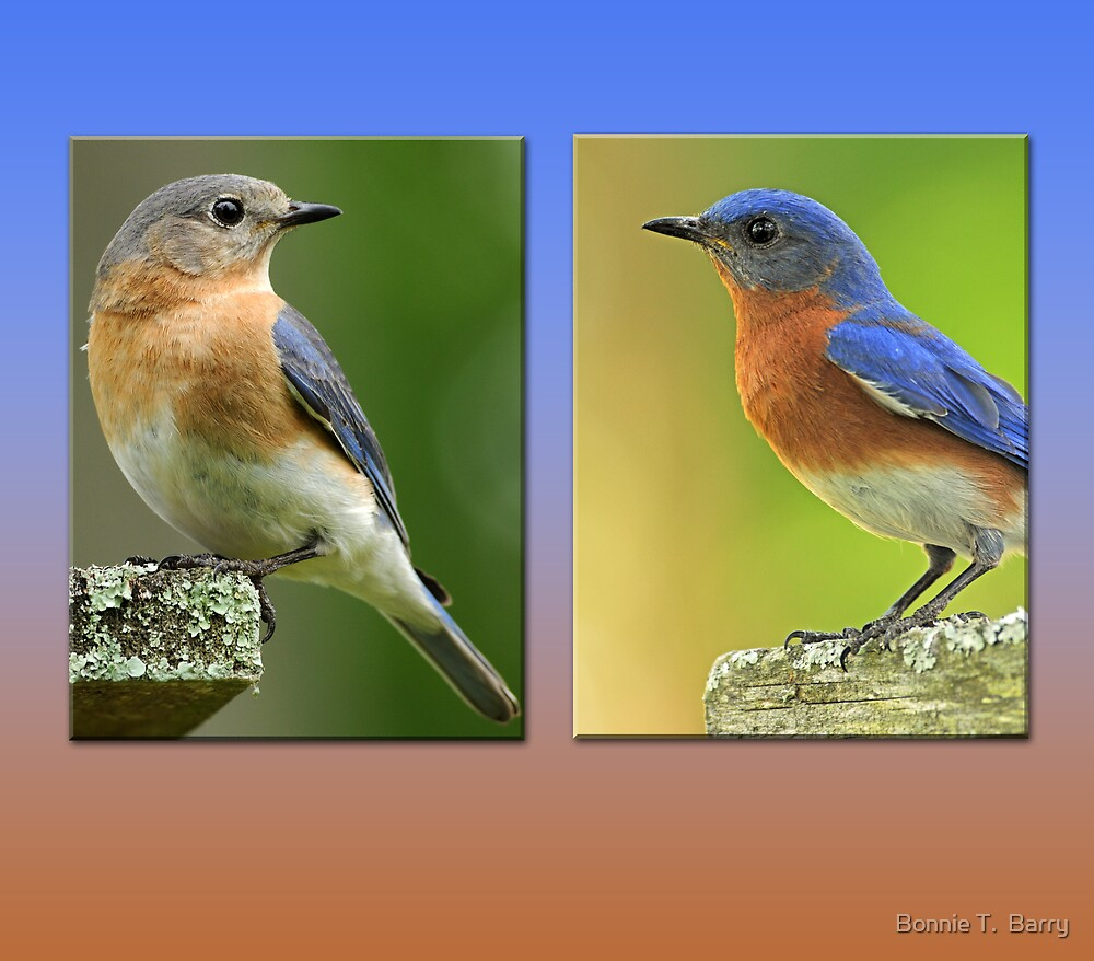 Bluebird Sweethearts by Bonnie T.  Barry