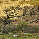 Hawthorn and golden hillside by Judi Lion