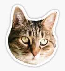 Downy Sticker