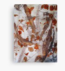 Australian eucalyptus  - Gondwana Colour  Canvas Print
