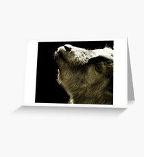 Pygmy goat  Greeting Card