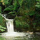 Waterfall at Eden Vale, Wexford, Ireland by David Carton