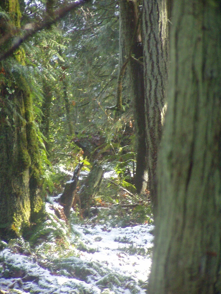 Forest Sun Rays in the Snow #46 by Dawna Morton