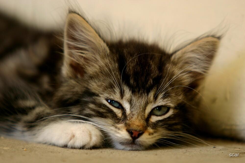 Kitten by scar