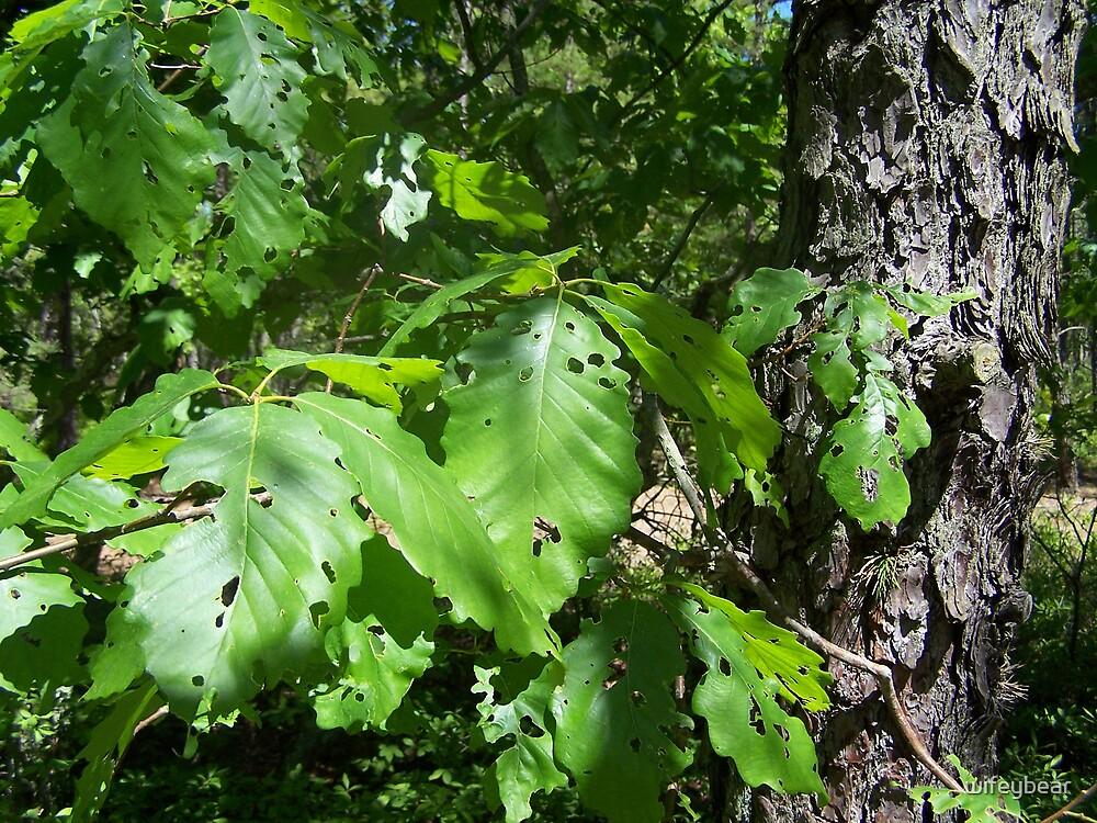 holy leaf by wifeybear