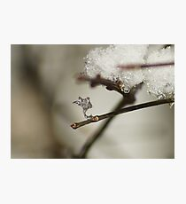 The Frozen Claw. Photographic Print