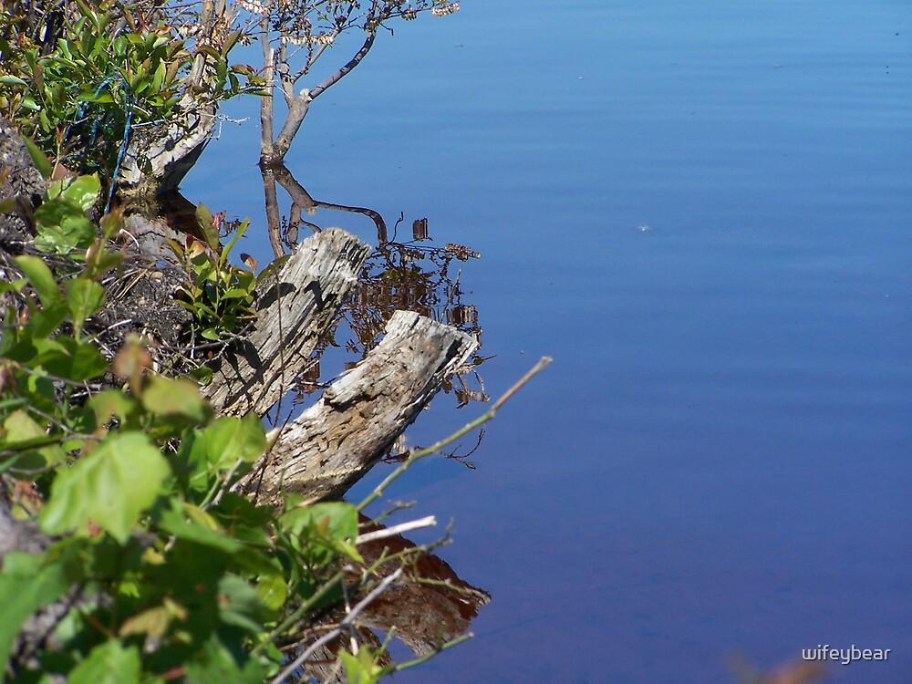 branch in water by wifeybear