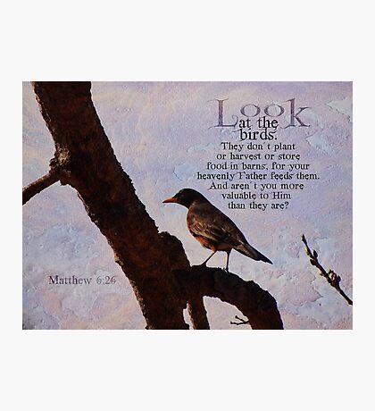 Matthew 6:26 scripture Photographic Print
