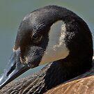 Goose by Sarah McKoy