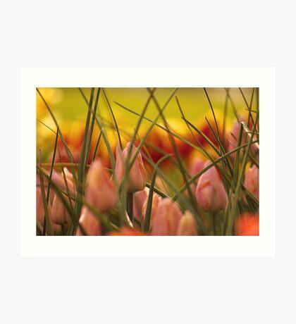 Emerging Spring. Art Print
