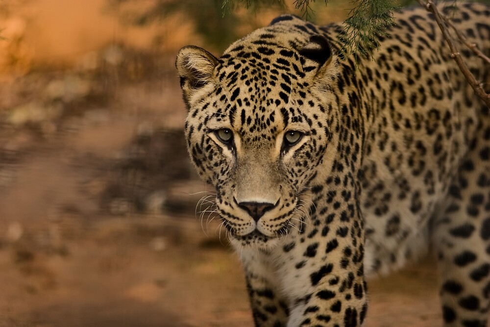 On the prowl by Marianne