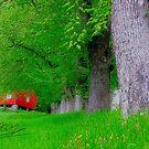 Cose della vita . Bellissima primavera . Trondelag . Norway. Dr.Andrzej Goszcz. by © Andrzej Goszcz,M.D. Ph.D