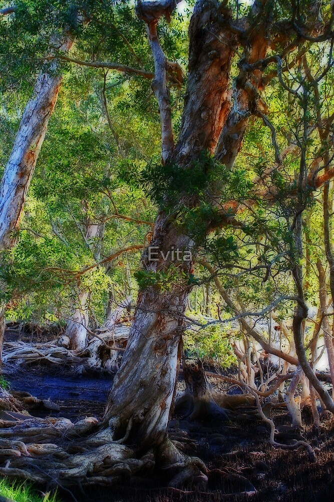 Roots by Evita