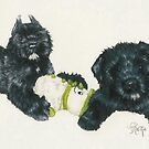 Bouvier des Flandres Puppies by BarbBarcikKeith