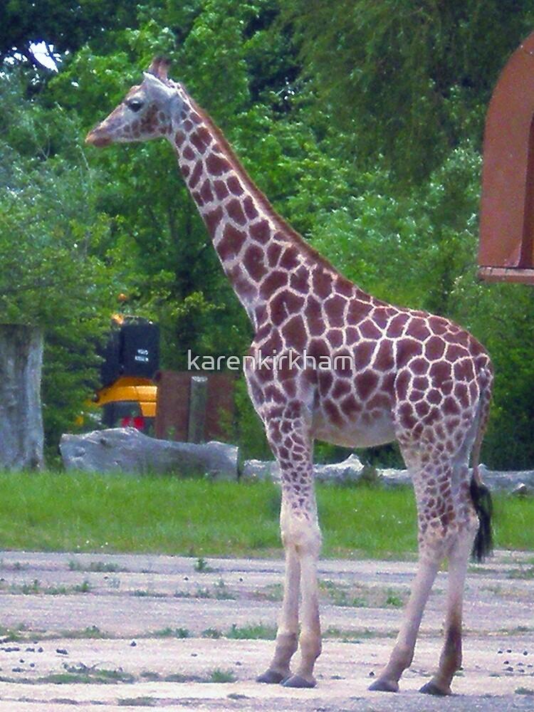 Giraffe by karenkirkham