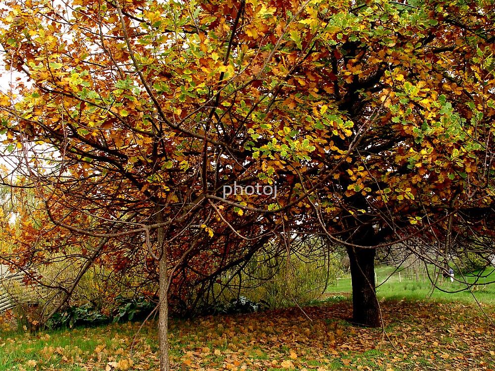 photoj 'Changing Seasons' by photoj