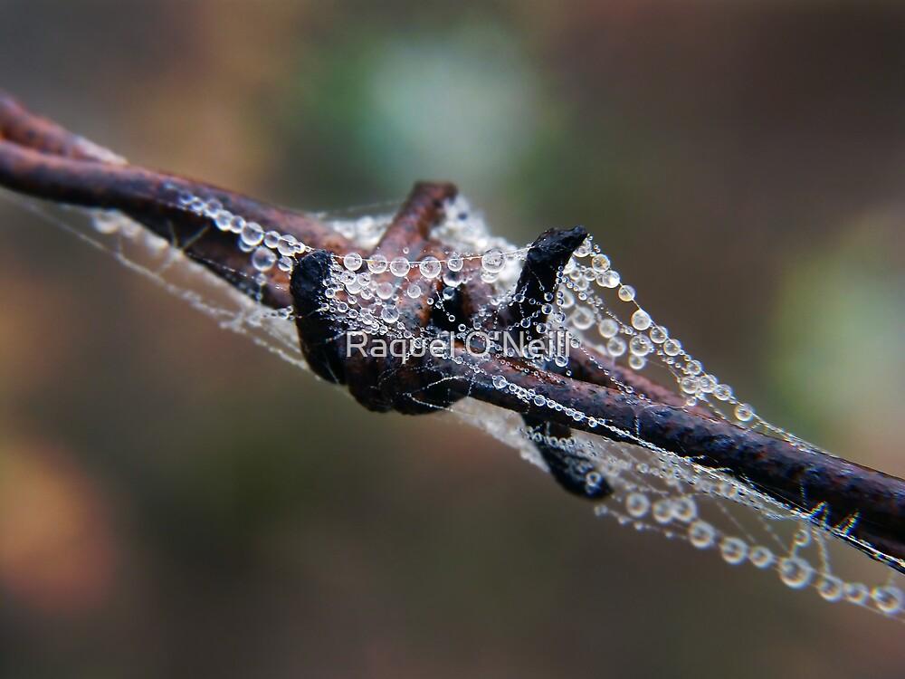 Rusty Web by Raquel O'Neill