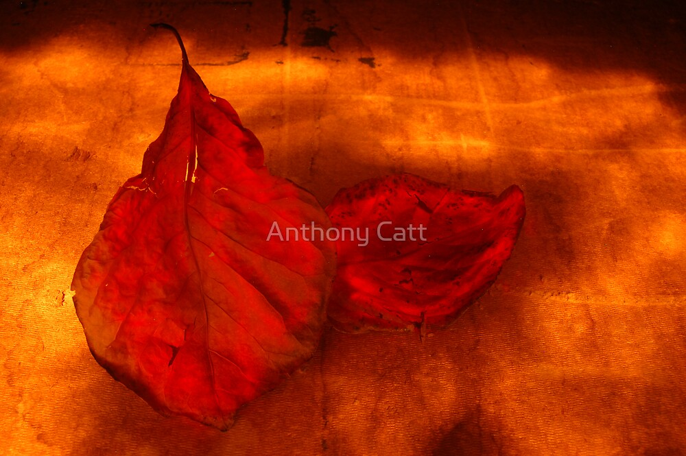 Red leaves by Anthony Catt