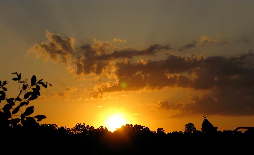 Golden Sunset with the Birds by redagainPatti