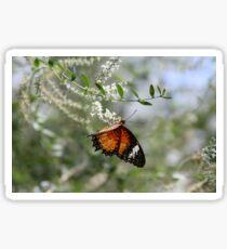 Flutter by Sticker