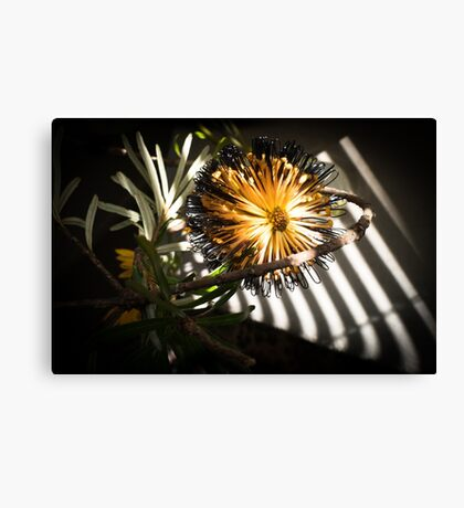 Banksia Still Life Canvas Print