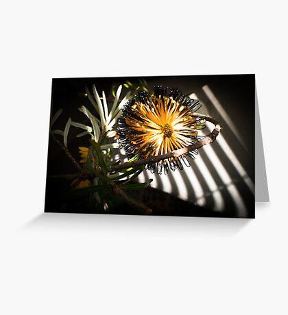Banksia Still Life Greeting Card