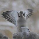 Dove by KansasA