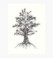 Tree sketch  Art Print
